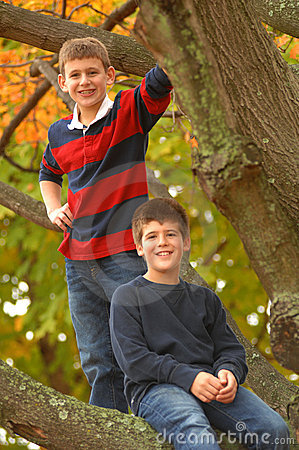 Brothers In A Tree
