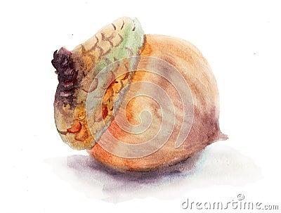 A brown acorn