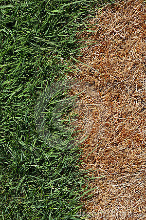 Free Brown And Green Grass Stock Photo - 14986150