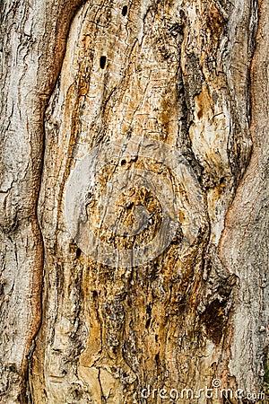 Free Brown Bark Texture Stock Photo - 38187900