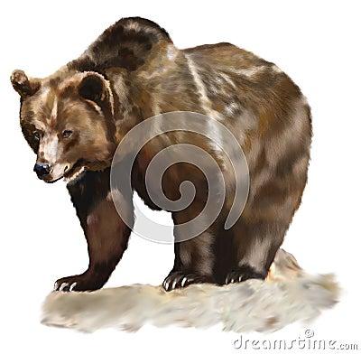 Free Brown Bear Royalty Free Stock Image - 24045936