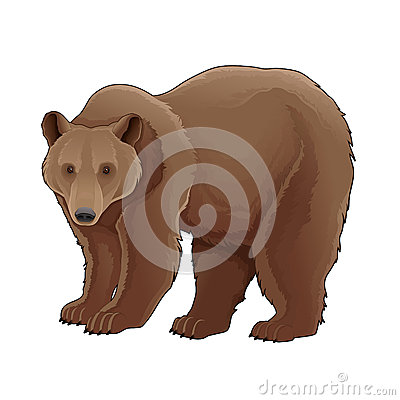 Free Brown Bear. Stock Image - 38326421
