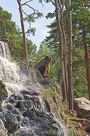 Free Brown Bear Stock Photography - 5676612