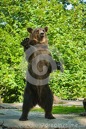 Free Brown Bear Stock Images - 64181634