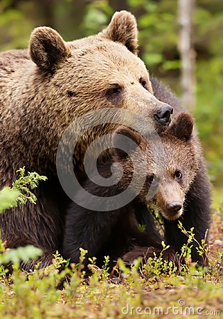 Free Brown Bear Mother With Her Cub Royalty Free Stock Image - 104672176