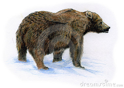 Brown bear on snow