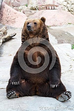 Brown bear takes a rest