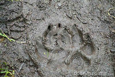 Brown Bear Track
