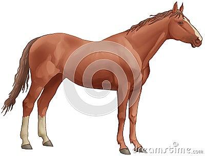 Brown beautiful horse. White back legs, a long tai