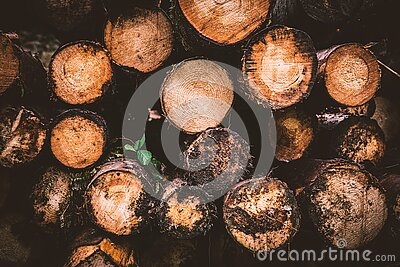Brown And Beige Wood Logs Free Public Domain Cc0 Image