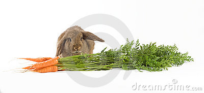 Brown bunny and carrots
