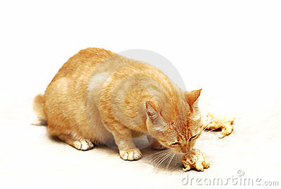 Brown Cat Eating