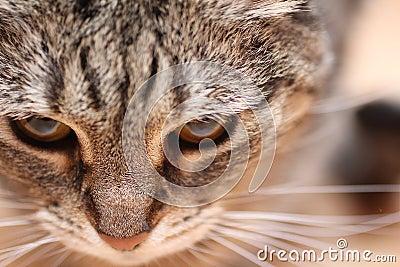 Cat macro shot