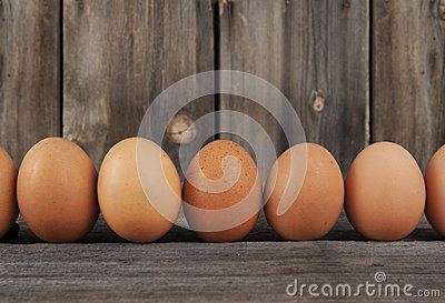 Brown Chicken Eggs Row