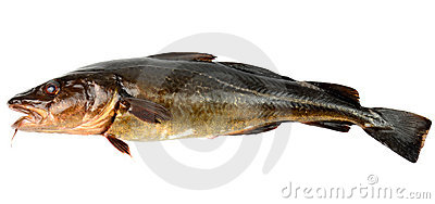 The brown cod