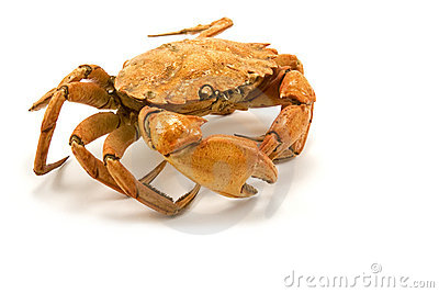 Brown cooked crab