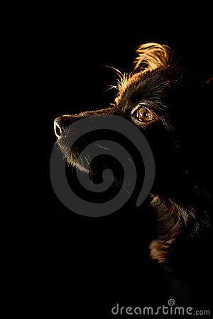 Free Brown Dog Royalty Free Stock Photography - 22899857