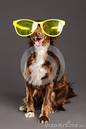 Brown Dog with Funny Glasses Studio Portrait