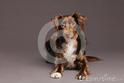 Brown Dog Studio Portrait