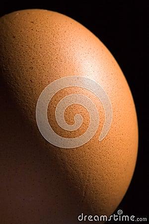 Brown egg closeup