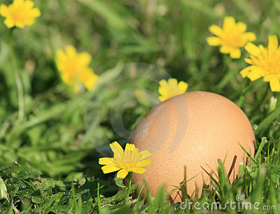 Brown egg in the grass