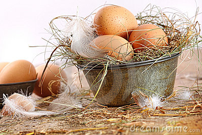 Brown eggs in old tin plate with feathers
