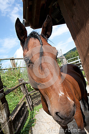 Brown friendly horse