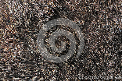Brown fur texture
