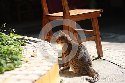 Brown And Gray Cat Near Wooden Chair On Daytime Free Public Domain Cc0 Image