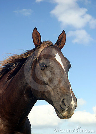 Free Brown Horse Stock Photography - 114512