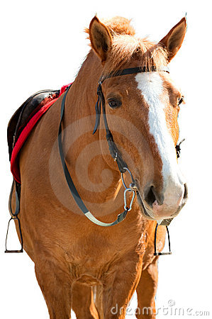Free Brown Horse Stock Photo - 18541830