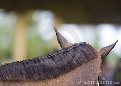 Brown horse braided mane