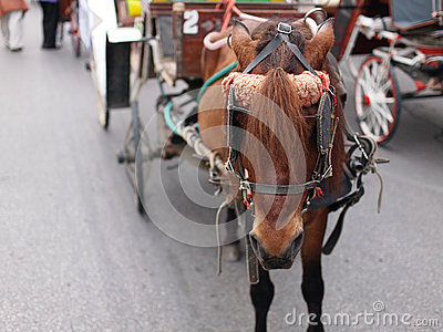 Brown horse and carriage