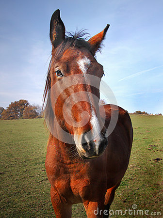 Free Brown Horse Closeup Head Stock Image - 66727721