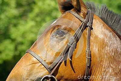 Brown Horse During Daytime Free Public Domain Cc0 Image