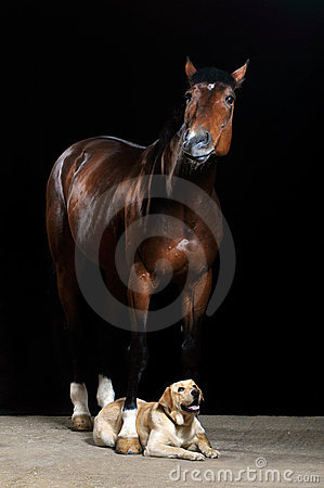 Brown horse and dog on the black background