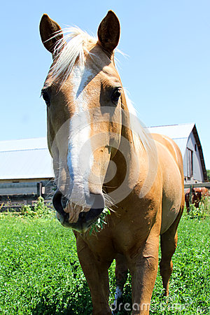 Brown horse in field