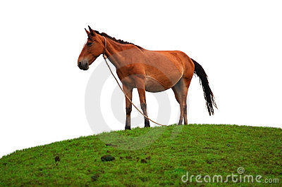 Brown horse on the grass field
