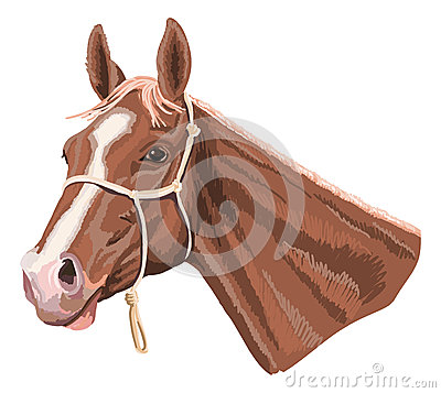 Brown horse with halter