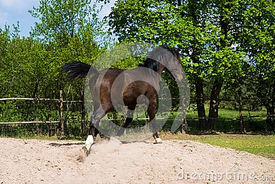 Brown horse in jump
