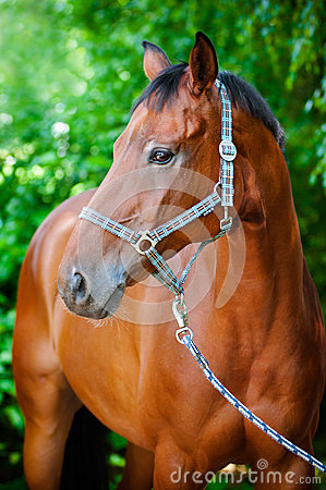 Free Brown Horse Portrait Stock Photography - 32148552