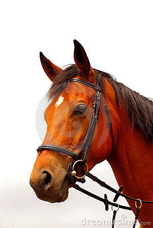 Free Brown Horse Portrait Royalty Free Stock Images - 7779509