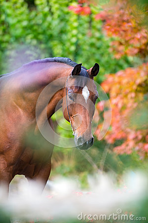 Free Brown Horse Portrait On Colorful Nature Background Royalty Free Stock Photo - 44245335