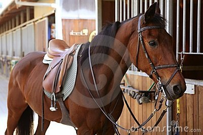 Brown Horse  With Saddle And Reins Stock Images - Image: 12748144