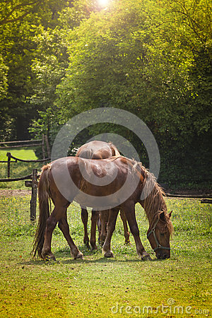 Free Brown Horses Stock Photography - 55094952
