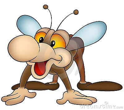 Brown Housefly