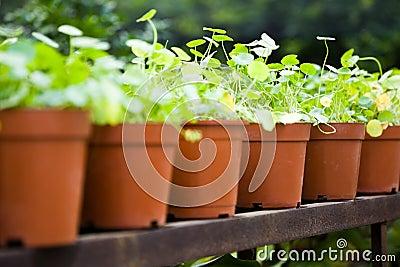 Grass in brown pot