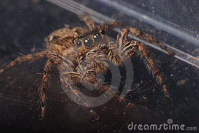 Brown Jumper
