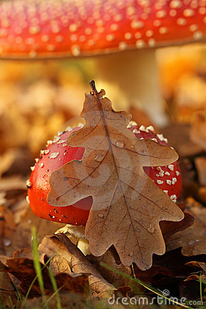 Brown leaf on a toadstool