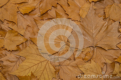 Brown leafs